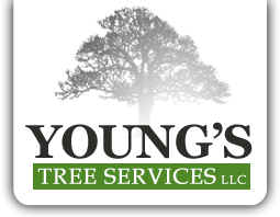 Youngs Tree Services LLC