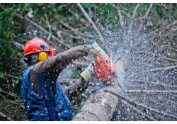 Tree Service in Arcadia, Florida