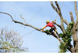 Tree Pruning in Bokeelia, Florida