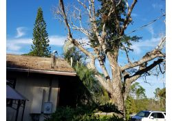 Tree Removal in Bokeelia