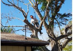 Tree Services in Venice, Florida