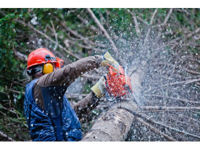 Tree Service in Venice, Florida