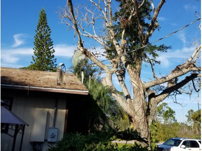 Tree Removal in Arcadia